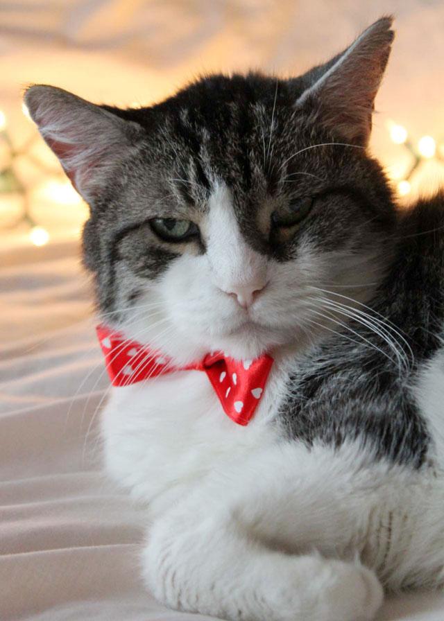 eddie-cat-christmas-portrait-2014-06