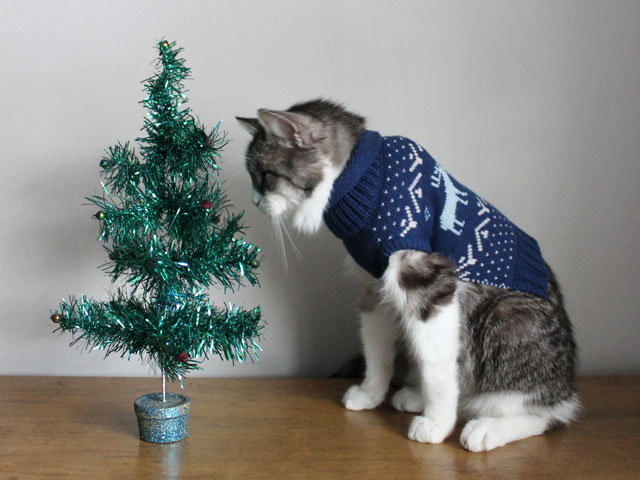 cat-wearing-a-sweater-looking-at-a-christmas-tree