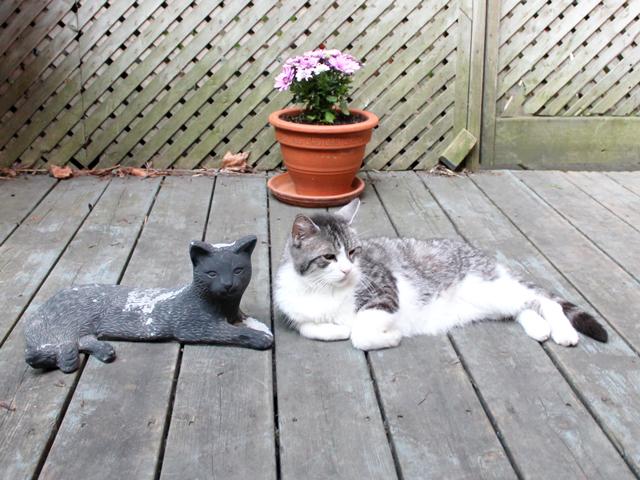 eddie-and-the-cat-statue