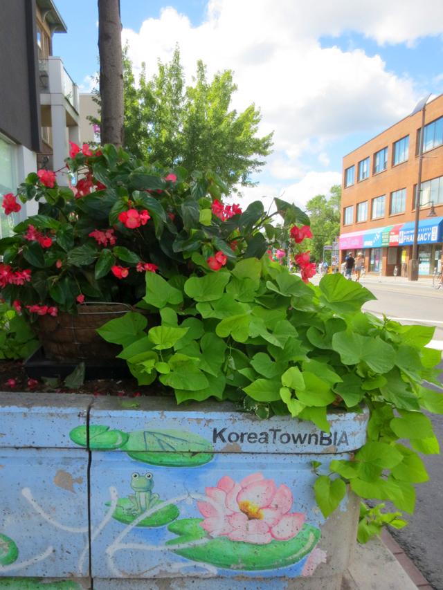 koreatown-toronto-street-planter