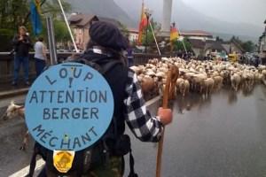 bergers-decouvrent-vie-de-berger-2