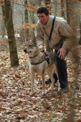 belgique-loup-gedinne-wild-focus-avait-vu-juste