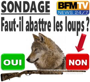 rmc-remet-couvert-contre-loup