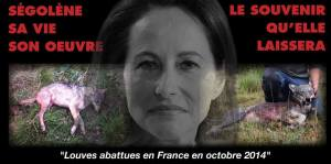 operation-lettre-sego-pour-loup