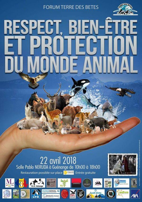 klan-loup-forum-terre-betes-18