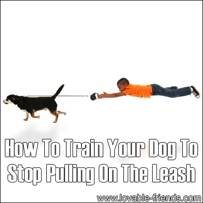 how to train dog to stop chewing clothes