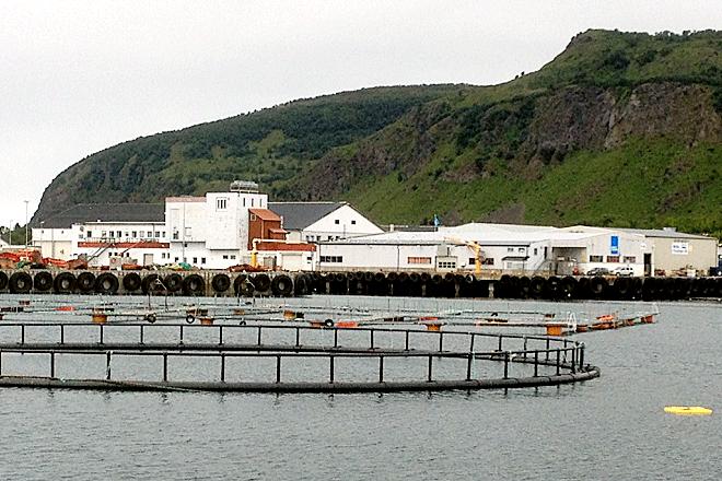 laksemerder levendefangst levendefanget torsk norway seafoods