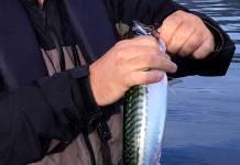fiske turist fritidsfiske makrell
