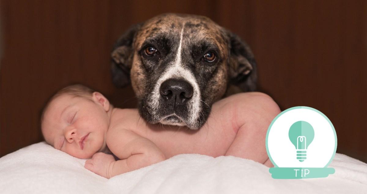 huisdier, hond, baby