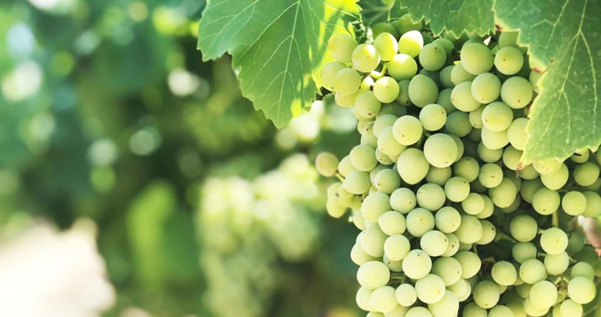 Snelcursus wijnen voor beginners