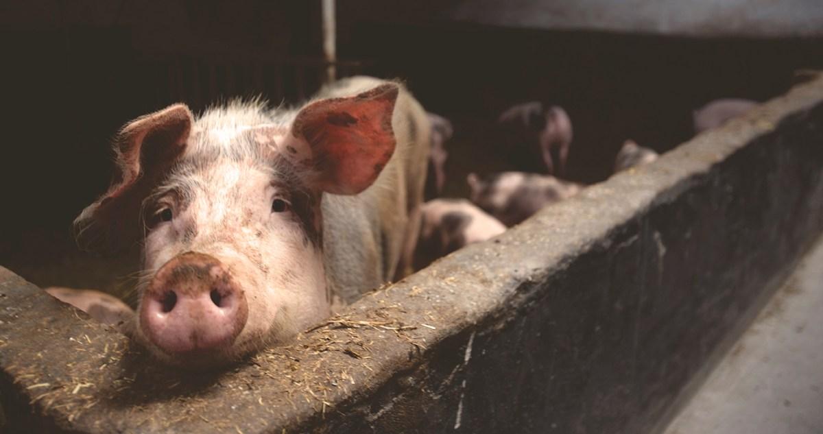 Stoppen met vlees eten