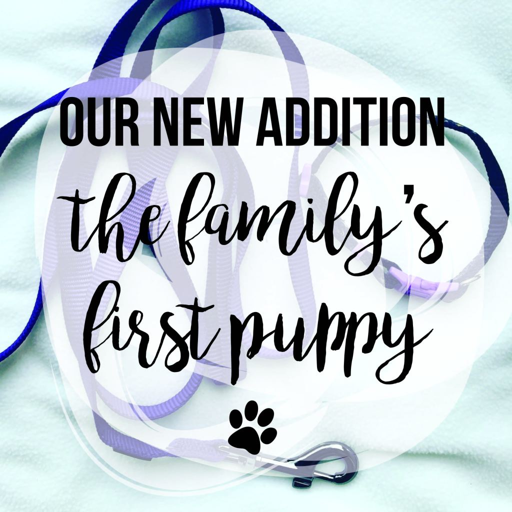 Our New Addition: The Family's First Puppy