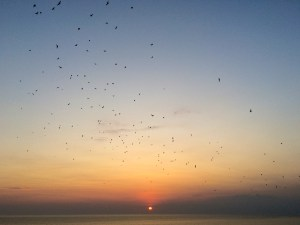 bats flying out at sunset tanah lot temple bali indonesia