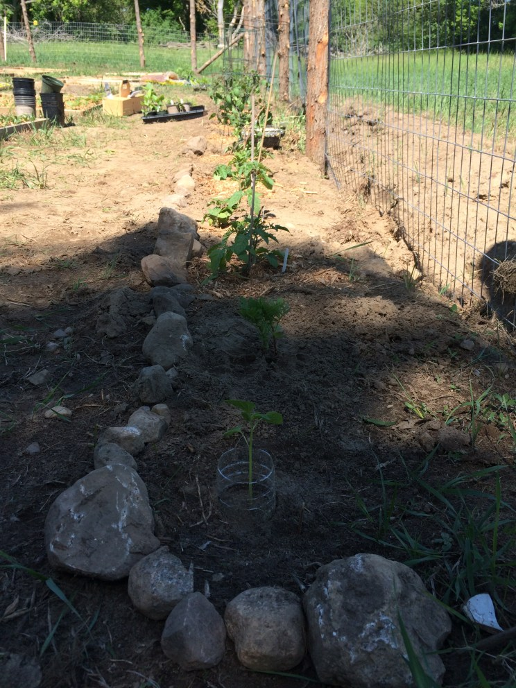 little rock wall for tomatoes