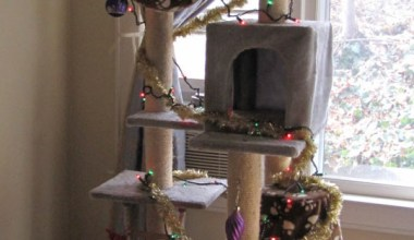This is what you do when your cat won't stop messing with the christmas tree....