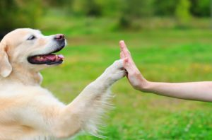 Dog doing a high five