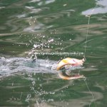 Fish Lake Utah Camping