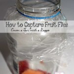 DIY: How to capture fruit flies in a bottle