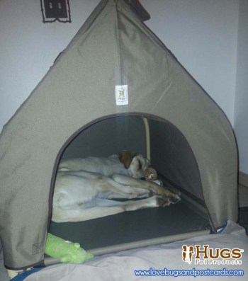 Hugs Pet Products - Gifts for Pets