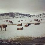 Visiting Hardware Ranch in Blacksmith Fork Canyon, Utah