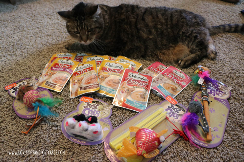 Mosaic Cat Craft +3 ways to show your cat extra love