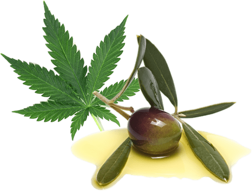 Cannabis and olive leaf image