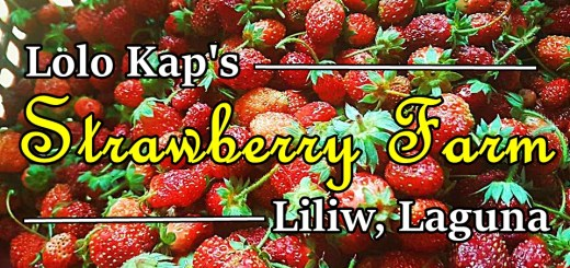 strawberry farm in Liliw, Laguna