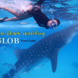 whale shark watching in oslob cebu