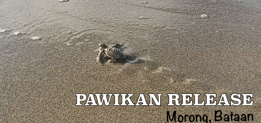 Bataan Pawikan