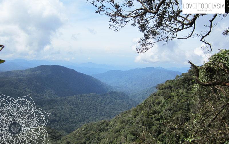 Die Cameron Highlands