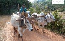 Ein Bauer bei Kalaw
