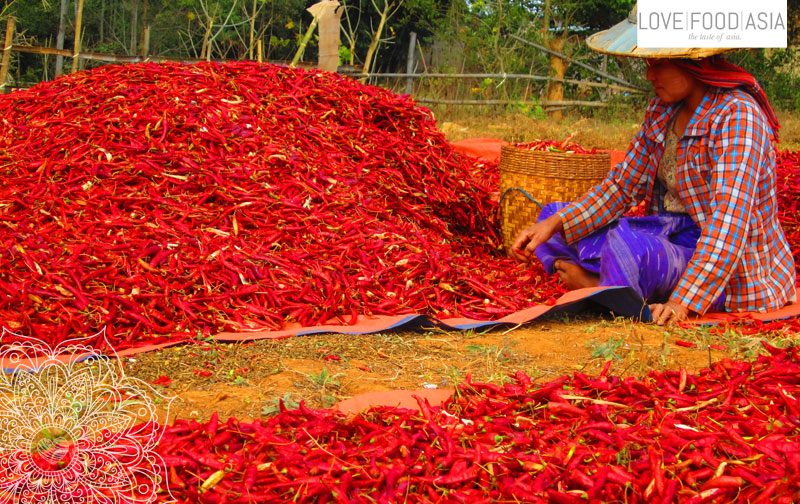 Drying chilies