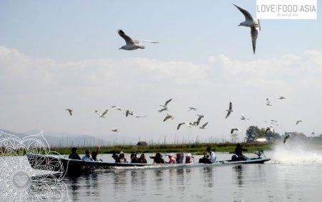 Möwen auf dem Inle See