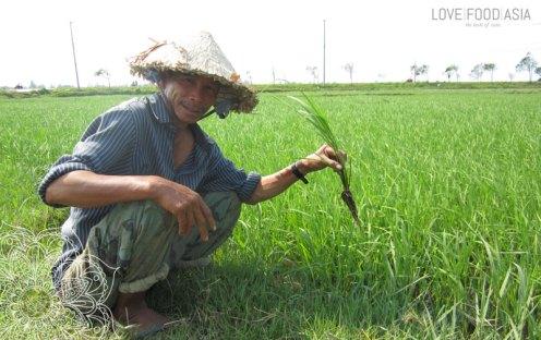Farmer in der Nähe von Hoi An