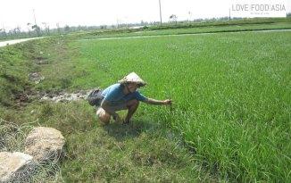 Ich als Farmer