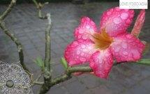 Beautiful flower in Hue