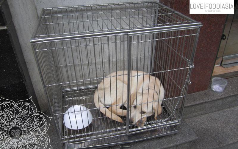 Hanoi Hunde