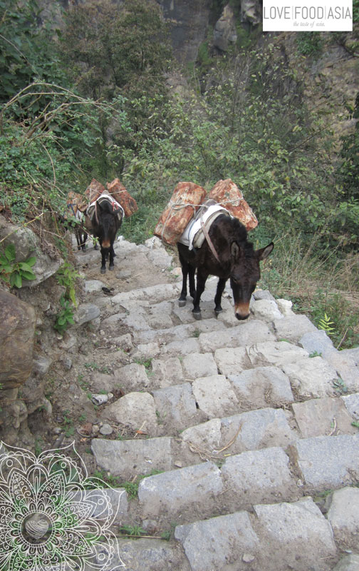 Donkeys at work
