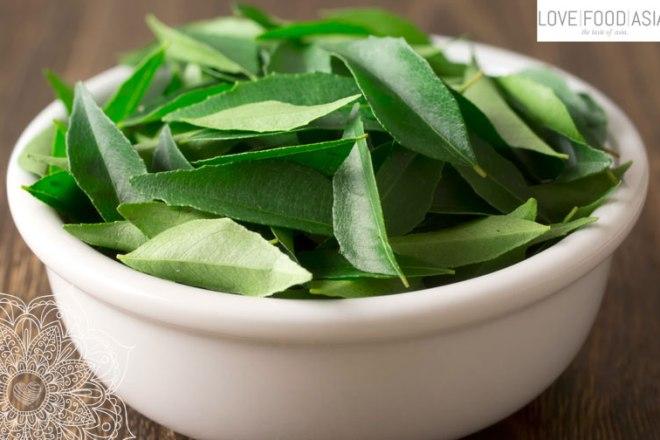 Curryblätter (Murraya koenigii)
