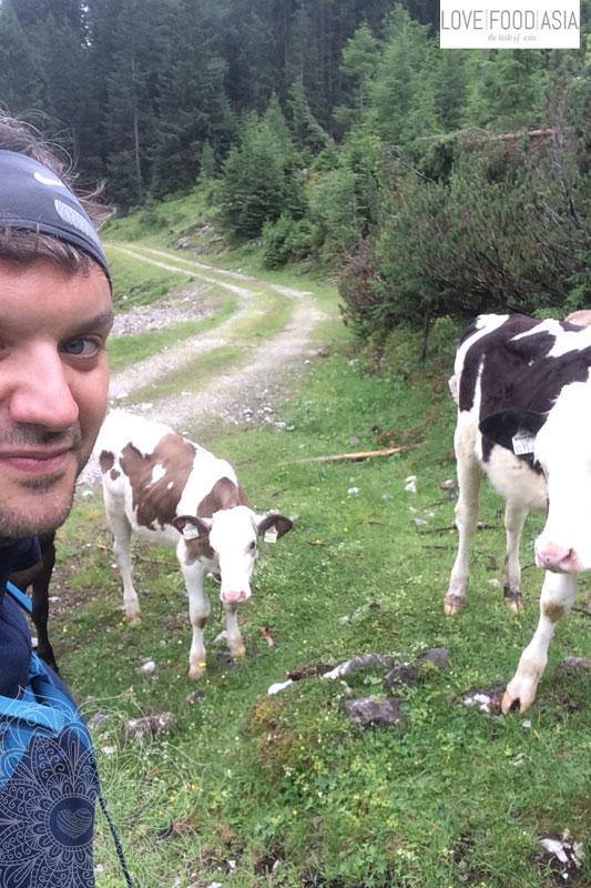 Zwei junge Kühe am Wegrand