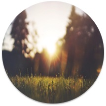 The sun sets as the light bounces off the tall grass. Love Heal Grow Counseling offers treatments for anxiety, online anxiety therapy in California, and other services. Contact an online anxiety therapist for support!