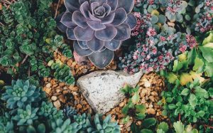 A close up of a lush garden with different plants & a rock in the center for Love Heal Grow. We offer online therapy in California. Contact a Sacramento therapist for support!