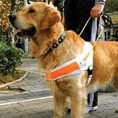 disability dog
