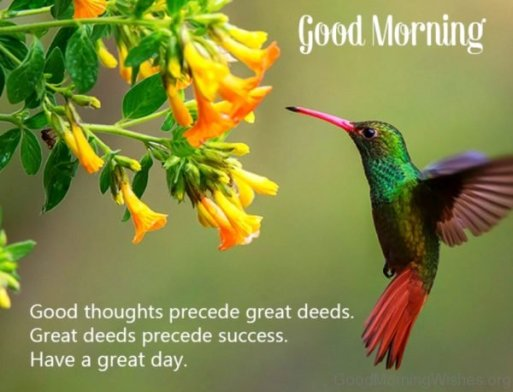 good morning have a good day