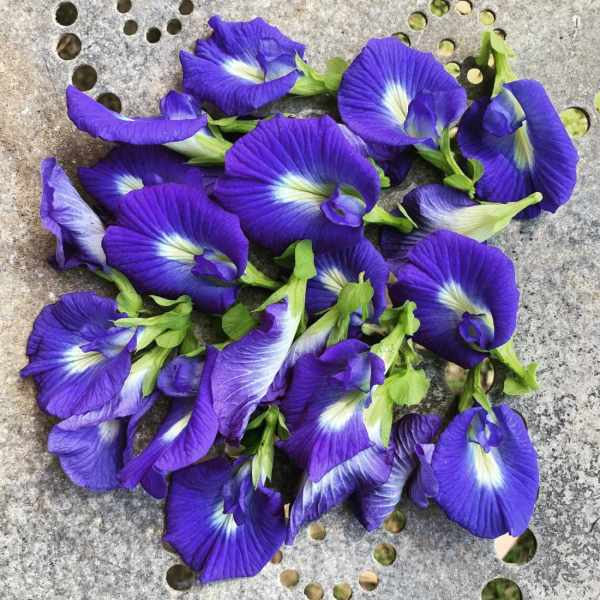 Blue Butterfly Pea Seeds