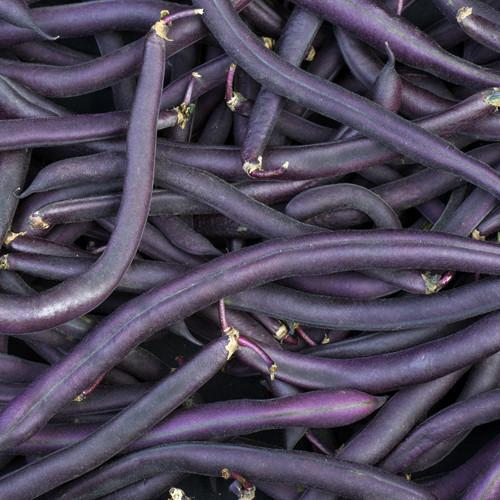 Royal Burgundy Bean
