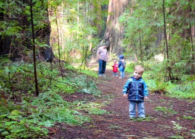 Rockefeller Loop Southern Humboldt County Redwoods