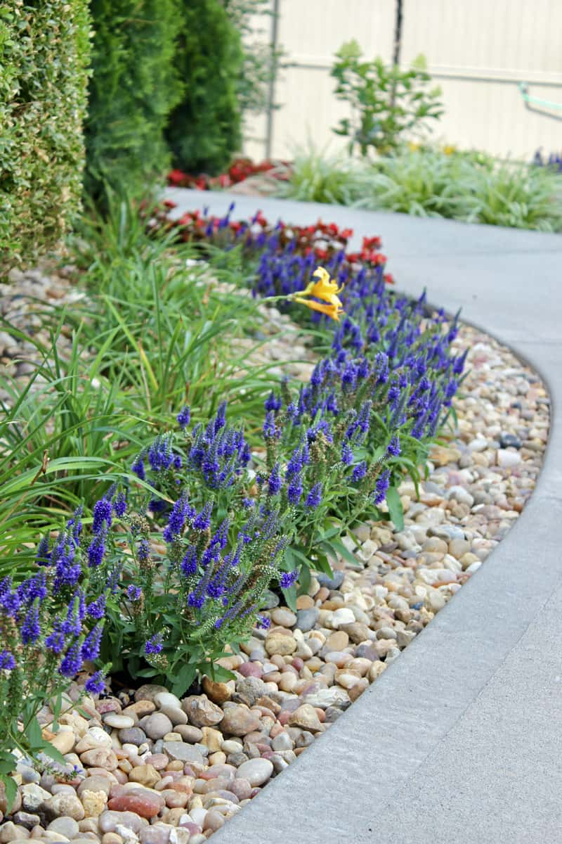 Front yard landscaping ideas, Veronica Perennial, Daylily