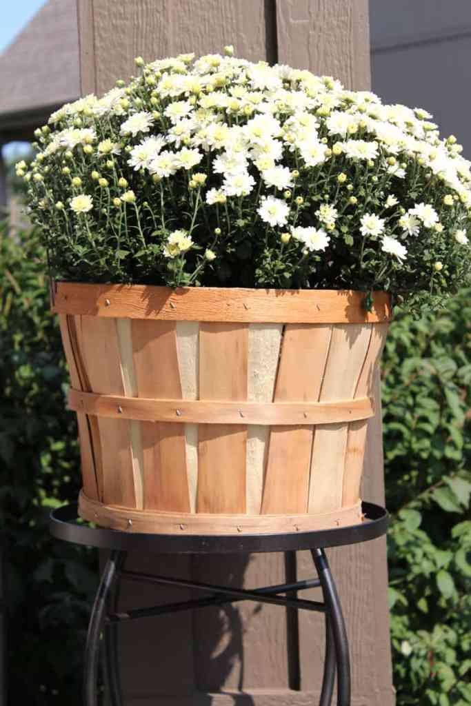 White mum, apple basket with mum, fall porch decor