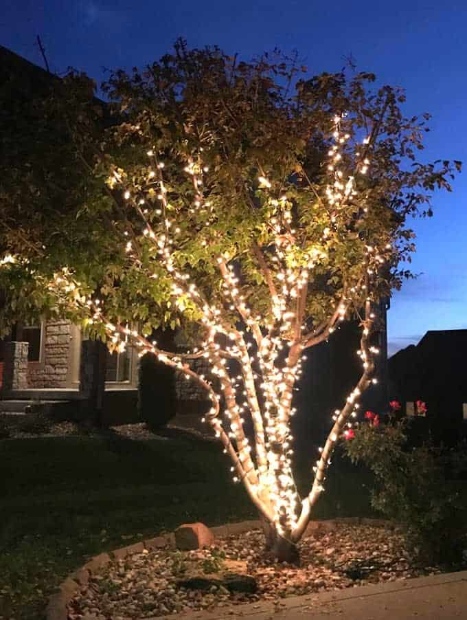 wrap lights on an outdoor tree in 6
